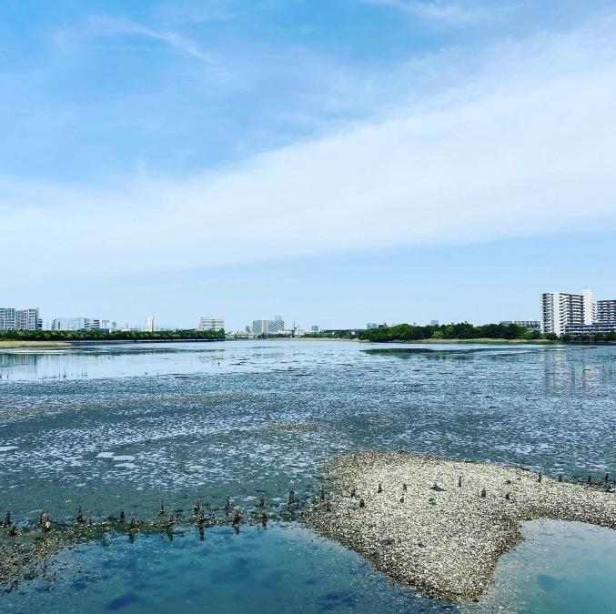 国指定谷津鳥獣保護区「谷津干潟」